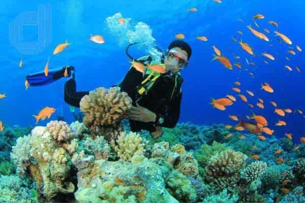 Tour Du Lịch Đảo Hòn Tằm Nha Trang Trong 1 Ngày |D2Tour Nha Trang