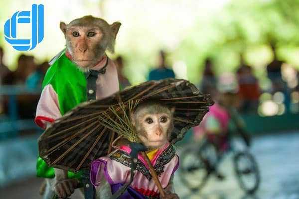 Tour Nha Trang 2 ngày 1 đêm dịch vụ chất lượng cao chuẩn D2tour